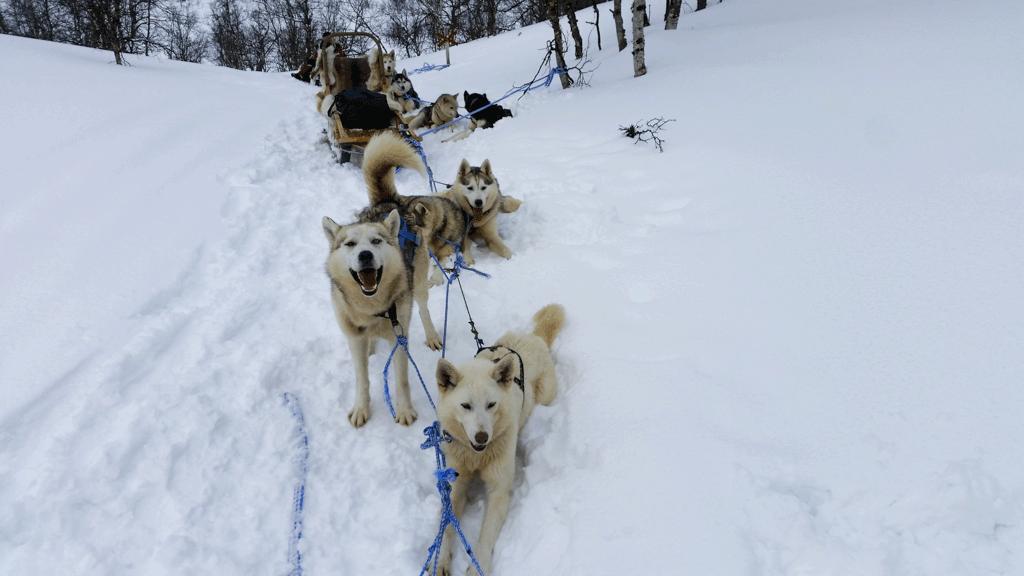 Husky Safari Tour Finland Don T Complain Travel
